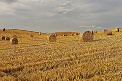 Rural landscape, agriculture farmland with crops, Poland, Europe Royalty Free Stock Photo
