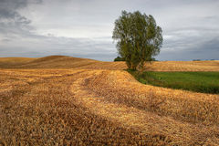 Rural landscape, agriculture farmland with crops, Poland, Europe Stock Photography