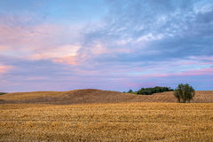 Rural landscape, agriculture farmland with crops, Poland, Europe Stock Image