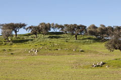 Rural landscape in the Alentejo, Portugal. Rural landscape and wild birds in the Alentejo, Portugal Stock Photo