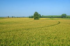Rural landscape along the Po cycle path. Near Guardamiglio and San Rocco al Porto (Lodi, Lombardy, Italy) at summer Royalty Free Stock Image