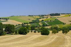 Summer landscape in Marches Italy near Appignano. Rural landscape along the road from Appignano to Montecassiano Ancona, Marches, Italy, at summer Stock Photo