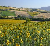 Summer landscape in Marches Italy near Filottrano. Rural landscape along the road from Filottrano to Appignano Ancona, Marches, Italy, at summer Royalty Free Stock Photography