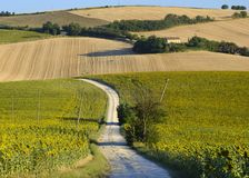 Summer landscape in Marches Italy near Filottrano. Rural landscape along the road from Filottrano to Appignano Ancona, Marches, Italy, at summer Stock Photo