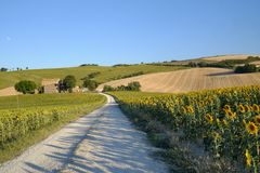 Summer landscape in Marches Italy near Filottrano. Rural landscape along the road from Filottrano to Appignano Ancona, Marches, Italy, at summer Stock Image