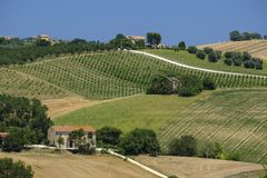 Summer landscape in Marches Italy near Montecassiano. Rural landscape along the road from Montecassiano to Montefano Ancona, Marches, Italy, at summer Stock Photography