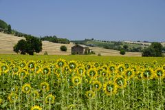 Summer landscape in Marches Italy near Montecassiano. Rural landscape along the road from Montecassiano to Montefano Ancona, Marches, Italy, at summer Royalty Free Stock Image