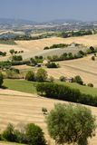 Summer landscape in Marches Italy near Ostra. Rural landscape along the road from Ostra to Jesi Ancona, Marches, Italy at summer Stock Photo