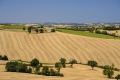 Summer landscape in Marches Italy near Ostra. Rural landscape along the road from Ostra to Jesi Ancona, Marches, Italy at summer Royalty Free Stock Images