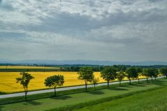 Rural landscape with an asphalt road and a blooming rapeseed stock images