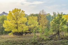 Rural landscape with autumn trees. October trees. Belgorod Region, Russia stock photo