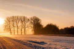 Rural landscape with bare trees in wintertime Stock Image