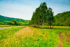Rural landscape with birch trees planted along the road. Stock Photos