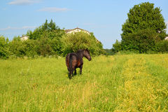 Rural landscape with a black horse Royalty Free Stock Photos