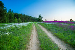 Rural landscape with a blossoming meadow and  the road Royalty Free Stock Photos