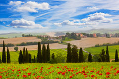 Rural landscape with blossoming poppies royalty free stock images