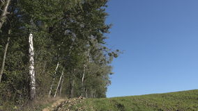 Rural landscape blue sky and the woods. Picturesque rural landscape and wall of woods, sunny autumn day stock video footage