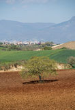 Rural landscape in Calabria, Italy Royalty Free Stock Photo