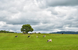 Rural landscape in central France Royalty Free Stock Images