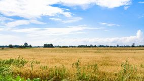 Rural landscape in Central Poland in summer. Country landscape - rural landscape along route E30 in Central Poland in summer Royalty Free Stock Photos