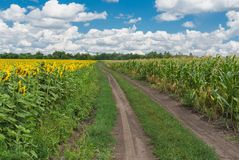 Rural landscape in central Ukraine Royalty Free Stock Photo