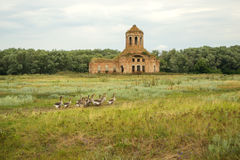 Rural landscape with church and geese. Thrown old church on a green countryside meadow and grazing geese stock photo