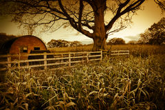 Rural landscape with corn field Stock Image