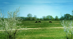 Rural landscape - countryside peaceful scene Royalty Free Stock Photo