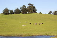 Rural Landscape Royalty Free Stock Photos
