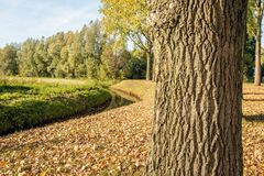 Rural landscape with a curved ditch in the fall season. Rural Dutch landscape with a curved ditch in the fall season. In the foreground is a thick tree trunk royalty free stock photos