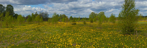Rural landscape with dandelions Royalty Free Stock Photography