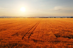 Rural landscape at dawn with the sun over the fields. Royalty Free Stock Photos