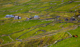 Rural landscape on Dingle Peninsula Royalty Free Stock Photo
