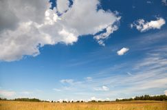 Rural landscape with dry field under beautiful sky Stock Image