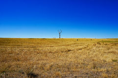 Rural landscape with dry grass and silhouette of dead tree Stock Images