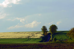 Rural landscape in the evening Stock Photography