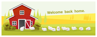 Rural landscape and farm animal background with sheep Stock Photography