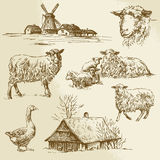 Rural landscape, farm animal Stock Photos