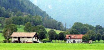 Rural landscape. Farm in a green meadow stock photo