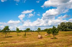 Rural landscape of field of haystacks under cloudy sky. Royalty Free Stock Photo