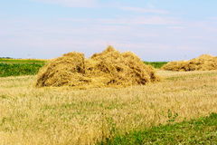 Rural landscape with field of hay after harvest, one Sunny day in late summer Royalty Free Stock Photos