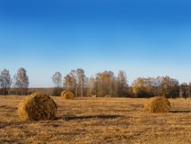 Rural landscape field meadow with hay bales after harvest in the sunny evening at sunset or sunrise in late summer. Royalty Free Stock Photography