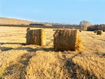 Rural landscape field meadow with hay bales after harvest in sunny evening at sunset or sunrise in late summer. Stock Photos