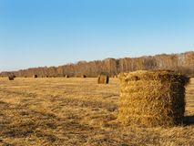 Rural landscape field meadow with hay bales after harvest in sunny evening at sunset or sunrise in late summer. Stock Photo