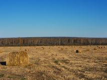 Rural landscape field meadow with hay bales after harvest in sunny evening at sunset or sunrise in late summer. Stock Photography