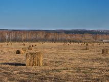 Rural landscape field meadow with hay bales after harvest in sunny evening at sunset or sunrise in late summer. Stock Images