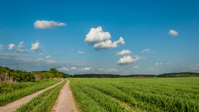 Rural landscape. field sandy road Royalty Free Stock Photos