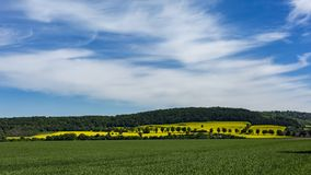 Fields of Rapeseed, time lapse. Rural landscape with fields of Rapeseed / Oilseed in full bloom. Rape seed oil from these fields is used to produce alternative stock video