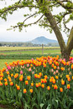 Rural Landscape Flowers Around Tree. Vertical image of tulips around base of tree. Farmland and mountain in background royalty free stock photos