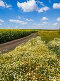 Rural landscape with flowers, road and field with sunflower, Russia. Rural landscape with flowers road and field with a sunflower Russia stock photo